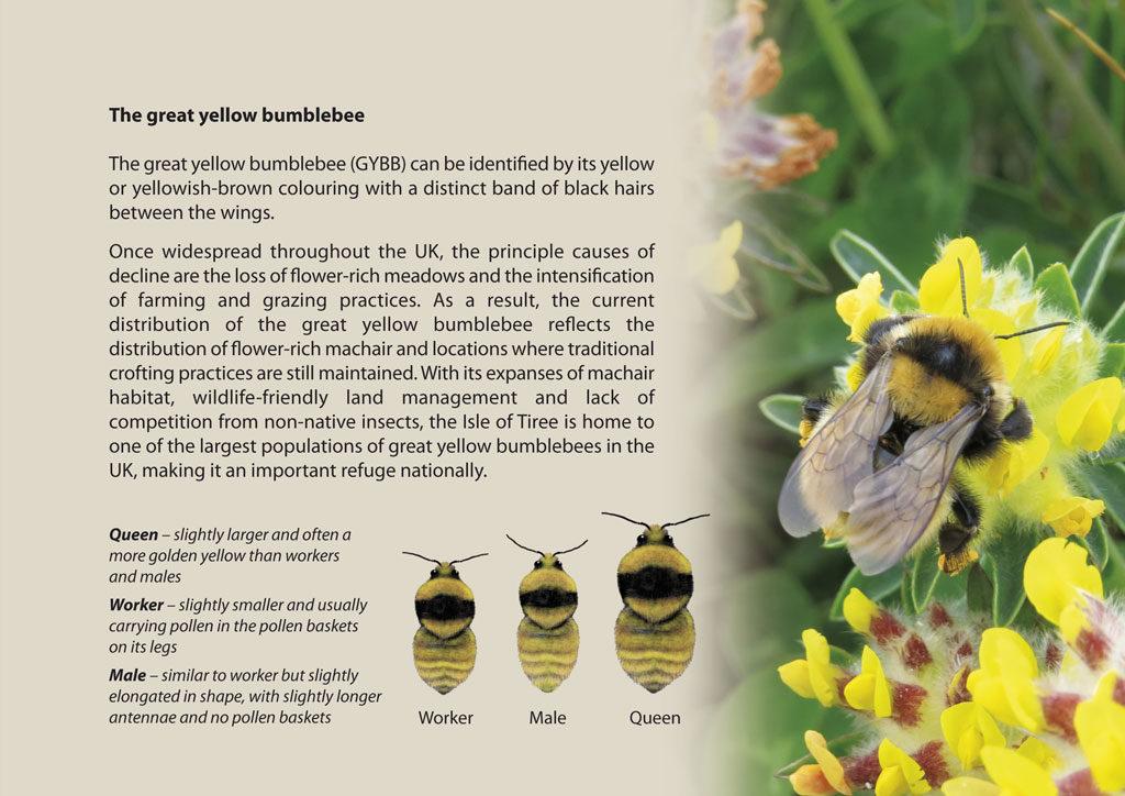 gybb brochure page